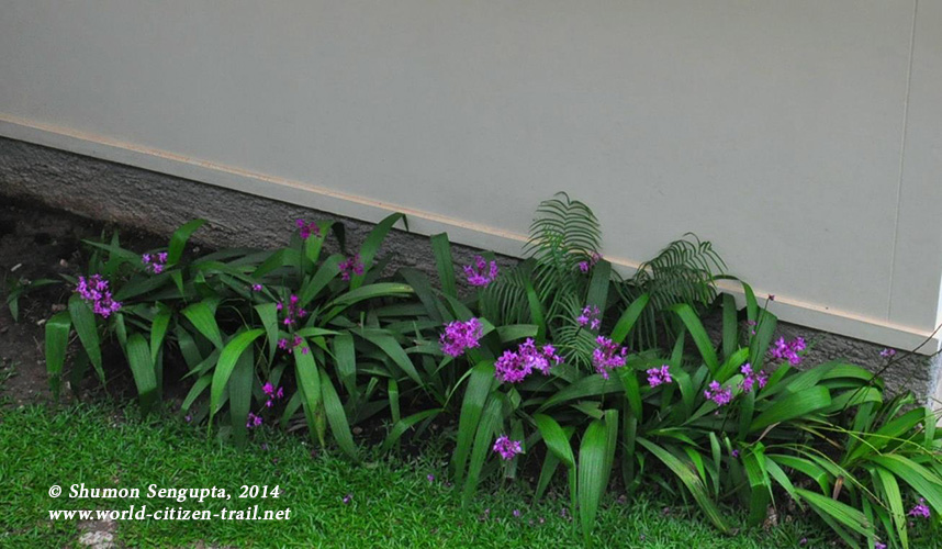Vientiane International School - plant