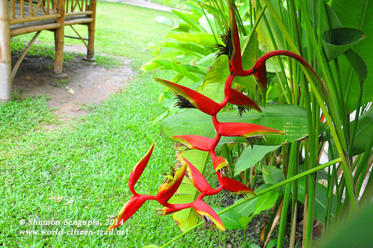 Vientiane International School - red flower