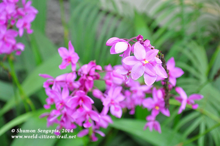 Vientiane International School. violet flower.