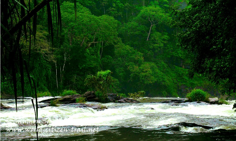 In the seclusion by the waterfall: Vazhachal, Kerala