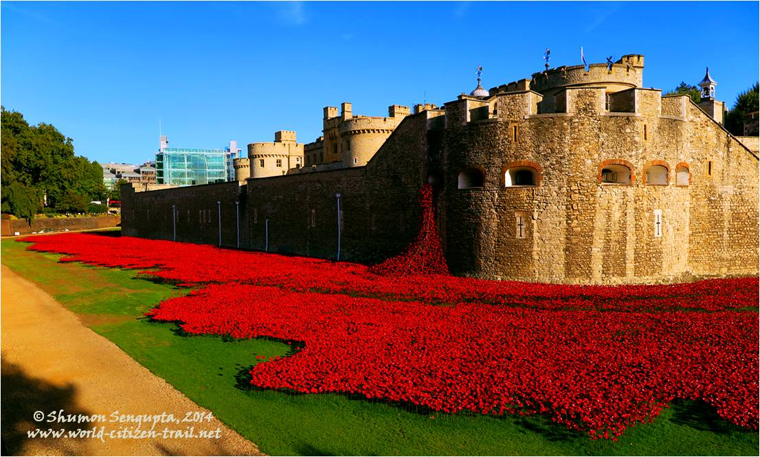 Remembrance Poppy: Flower Power at the London Tower